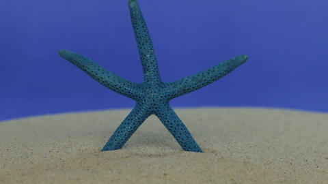 Approximation of starfish, lying on sand. Dolly shot. Isolated Live Action