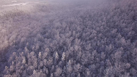 Snow Covered Trees in a Forest Image