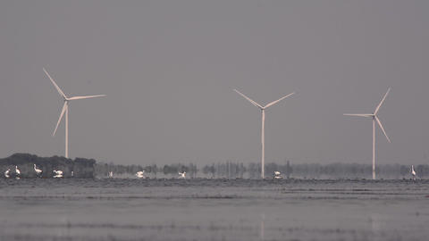Birds on the lake against the background of wind generators 영상물