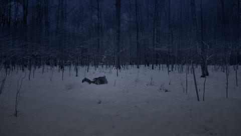 Man runs through the forest at night in the winter Footage