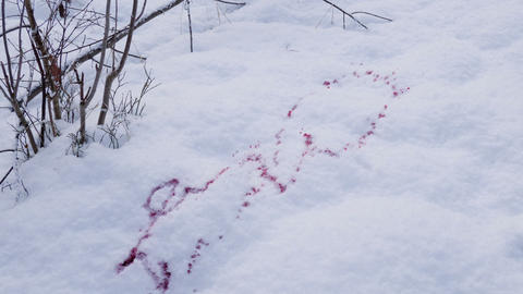 Spurt of blood into the snow Footage