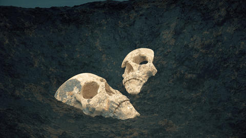 Buried skulls uncovered in the soil Footage