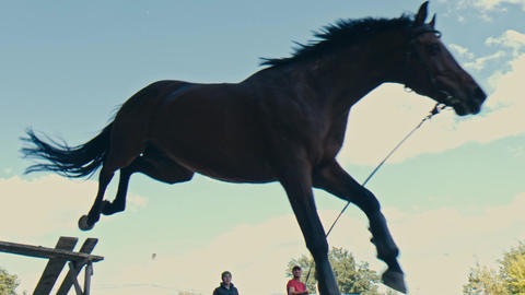 Close up of horse feet. Horse runs on the sand and jumps through a barrier Footage