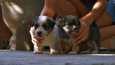 Fluffy Little Dogs Gambol near Woman Bare Feet Archivo