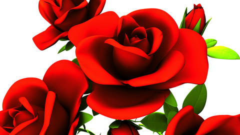 Red roses bouquet on white background Animation