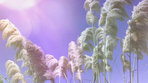 Backgounds: Reeds In The Wind 0