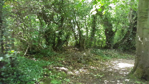 Walking Down a Green Wooded Lane with Trees Across the Path Footage