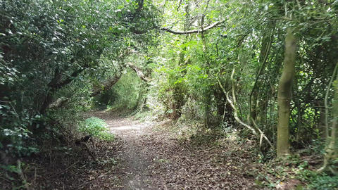 Walking Down a Green Wooded Lane with Low Hanging Trees Across the Path Live Action