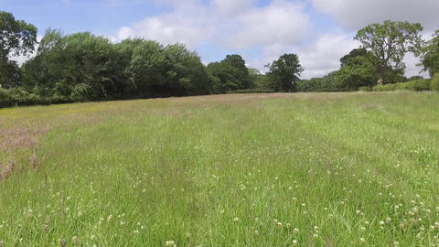 Flying Low Across Welsh Field with Long Grass in Summer Live Action