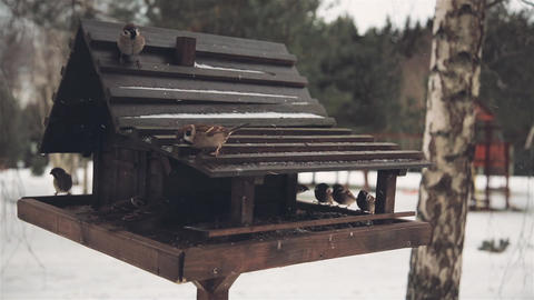 In winter, the birds arrived to feed on sunflower seeds Footage