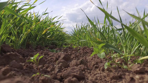 Taking off from Grass with View of Fields Near Hawarden North Wales Footage