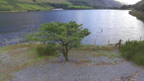 Low Altitude Aerial Shot Flying Over a Tree and Tal-y-Llyn Lake Live Action