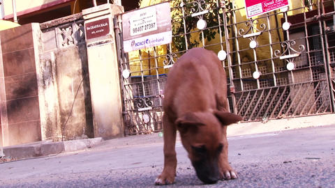 Close up cute puppy dog, street dog, dog playing in outdoor Live Action