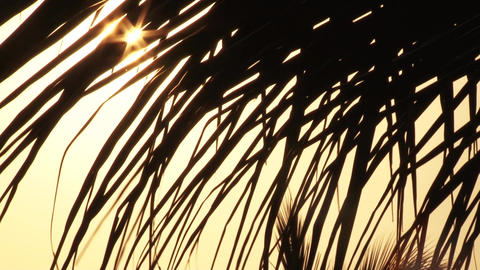Lens Flare through Palm Tree Leaves at Sunset Time, palm leaves with sun ビデオ