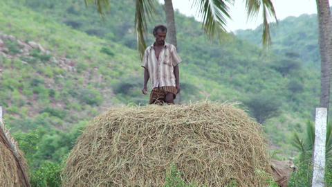 A man standing and watching on farmer bundle of wheat field Live Action
