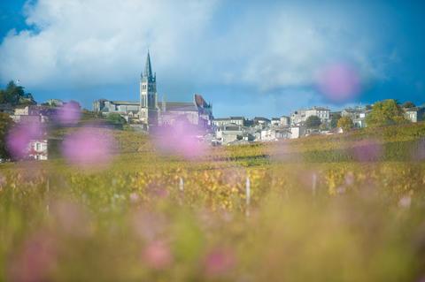 Saint-Emilion, Vineyard landscape, Vineyard south west of France Fotografía
