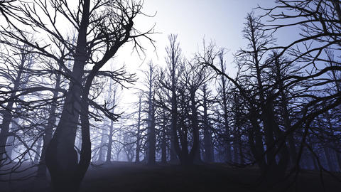 4K Dead Forest Misty Woods at Night Cinematic 3D Animation 1 Animation