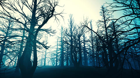 4K Dead Forest Misty Woods at Night Cinematic 3D Animation 2 Animation