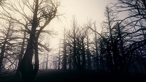 4K Dead Forest Misty Woods at Night Cinematic 3D Animation 3 Animation