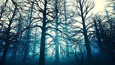 4K Dead Forest Misty Woods at Night Cinematic 3D Animation 6 Animation