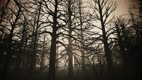 4K Dead Forest Misty Woods at Night Cinematic 3D Animation 8 vintage Animation