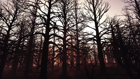 4K Dead Forest Misty Woods Cinematic 3D Animation 2 Animation