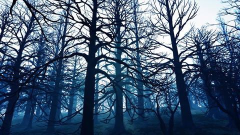 4K Dead Forest Misty Woods Cinematic 3D Animation 3 Animation