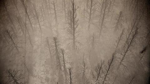 4K Dead Forest Misty Woods Cinematic Aerial 3D Animation 3 vintage Animation