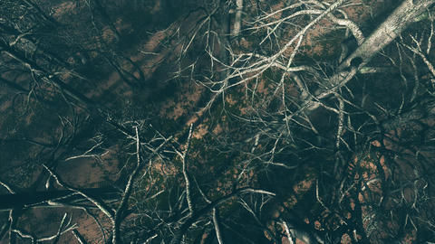 4K Dead Forest Misty Woods Cinematic Aerial Pullout 3D Animation 2 Animation