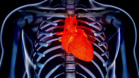 4K Human Body Transparent Heart Modern Anatomical 3D Animation 4 Animation