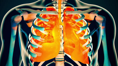 4K Human Body Transparent Lungs Modern Anatomical 3D Animation 3 Animation