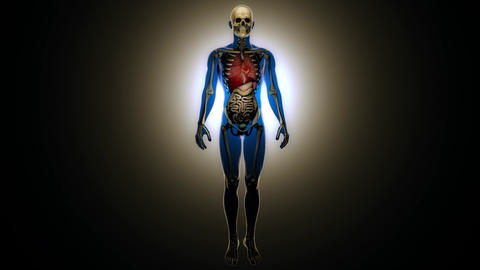 4K Sick Internal Organs and Skeleton in a Transparent Human Body Anatomical L Animation