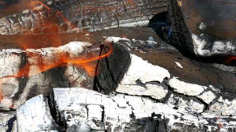 Burning Firewood Macro Live Action