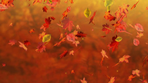 Fall Stock Video Footage