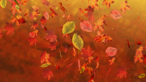 Fall stock footage