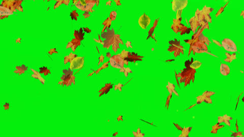 Falling leaves on green screen Stock Video Footage