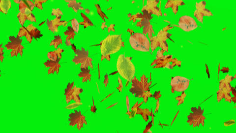 Falling leaves on green screen Animation