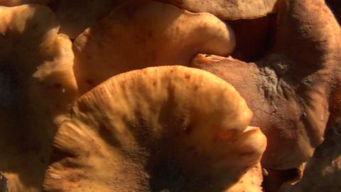 mushroom horizontal pan 01 Stock Video Footage