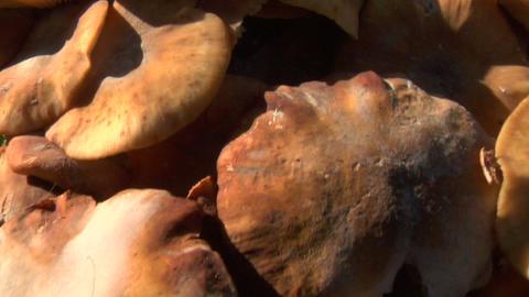 mushroom pan 01 Stock Video Footage