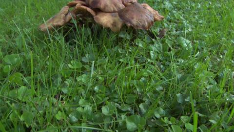 mushroom pan 03 Stock Video Footage