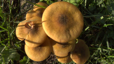 mushroom zoom out 02 Stock Video Footage