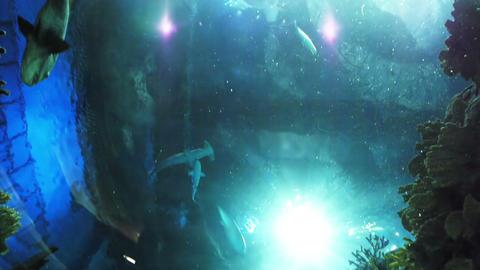 Many different fish in aquarium Stock Video Footage