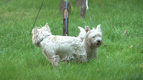 dogs Stock Video Footage