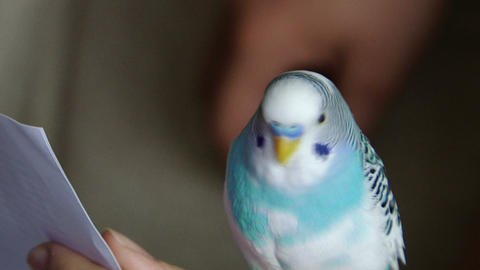 parrot 01 Stock Video Footage