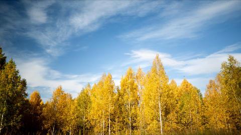 Autumn landscape pan TL Stock Video Footage