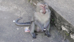 Monkey is eating nuts Filmmaterial