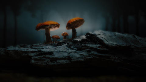 Mystical forest / magical mushroom scene Live Action