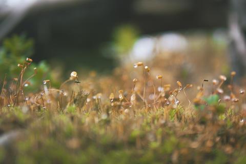 Closeup of Green Moss in Autumn Forest Fotografía