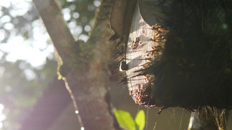 Beehive in Tropical Rainforest. 4K, Bees Flying Around Slowmotion Footage