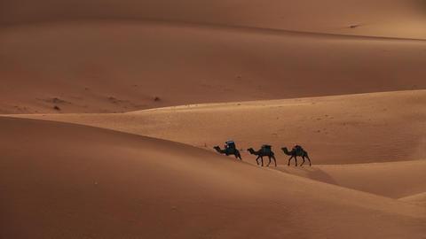 Camel caravan going in sand dunes in Sahara desert Footage